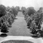 Główna aleja w parku guzowskim, lata 30. XX w.